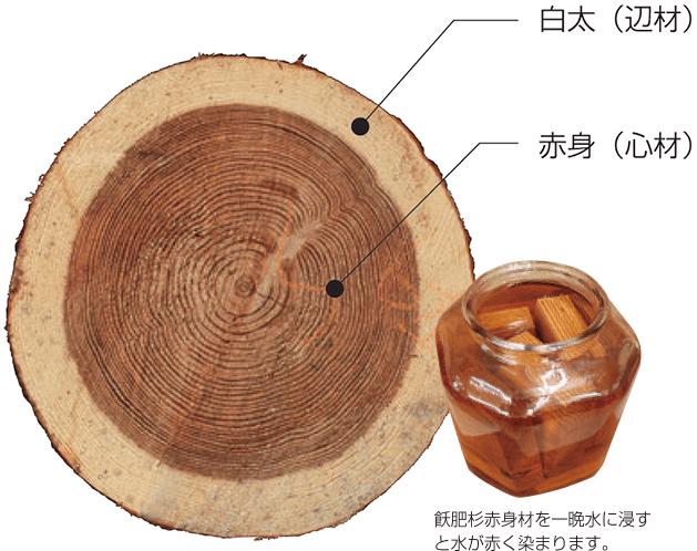 白太(辺材) 赤身(心材) 飫肥杉赤身を一晩水に浸すと水が赤く染まります。